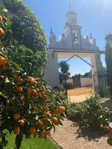 Visita de influencers en la Hacienda La Bodeguilla en Sevilla